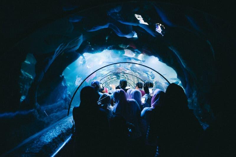 走在隧道的人在与异乎寻常的鱼的玻璃天花板下在水公园 免版税库存图片