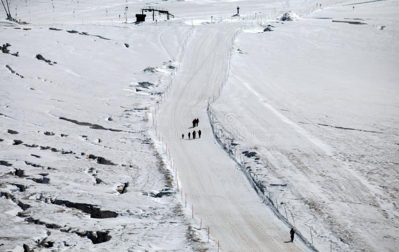 走在雪的小组老牛夏令时 高原罗莎, Val D `奥斯塔,意大利 库存照片