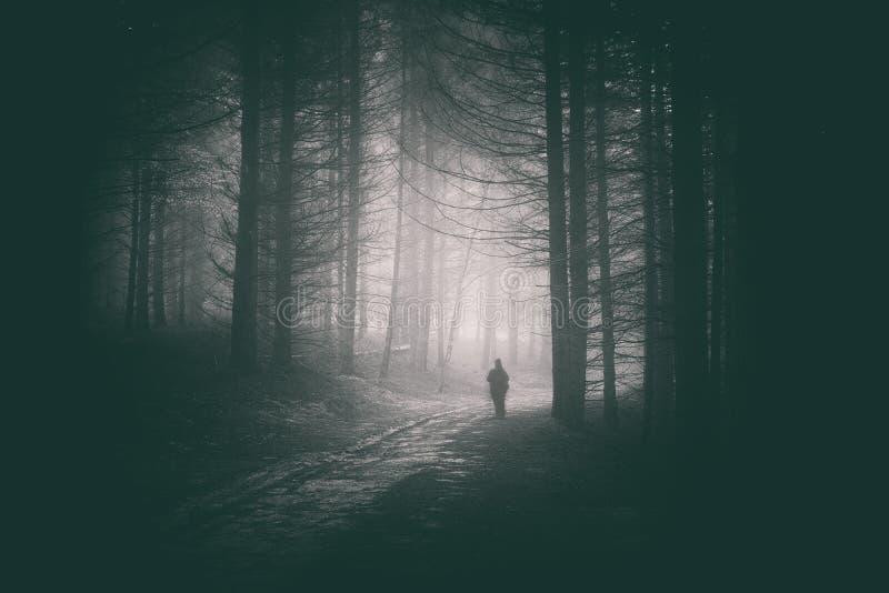 走在黑暗的森林道路的Peson  免版税库存照片