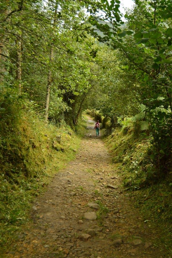 走在Encantau Camin的路线的意想不到的扔石头的道路的女孩和狗在利亚内斯中委员会  自然,旅行, 免版税库存照片