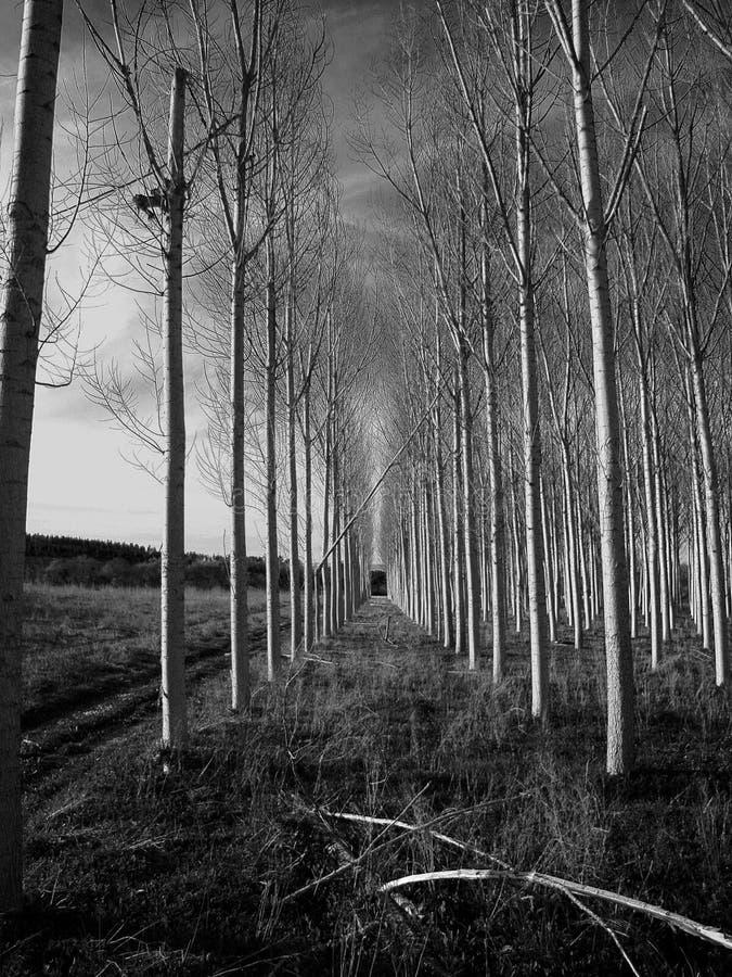 走廊结构树 库存照片