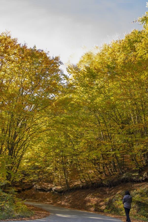 走沿国家柏油路的妇女的后面通过在与秋天叶子的林木之间 免版税库存图片