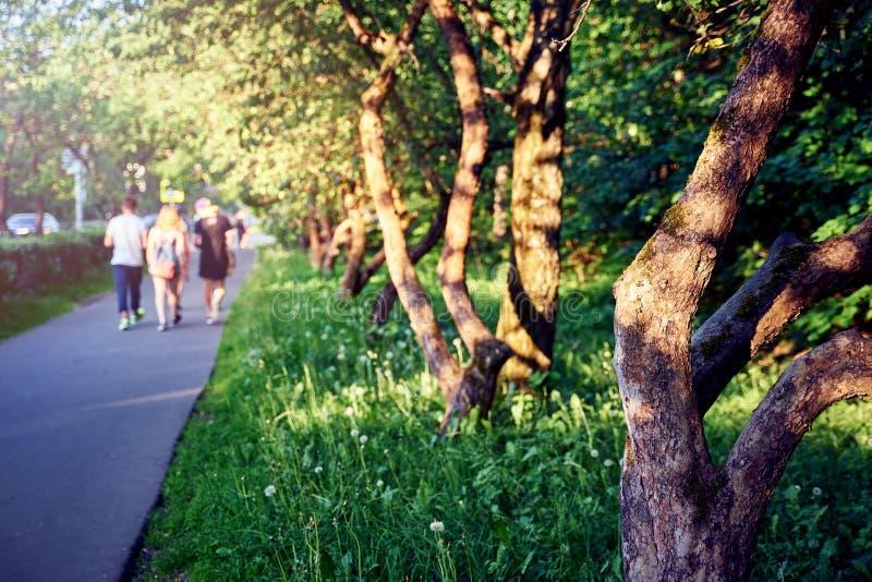 走沿有苹果树和绿草的胡同的学生 开始学期 库存图片