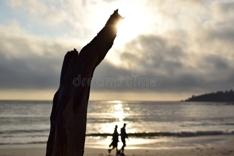 走由海的已婚资深或年轻夫妇在偏僻的海滩在握手的日落 树干或分支在海边 免版税库存图片