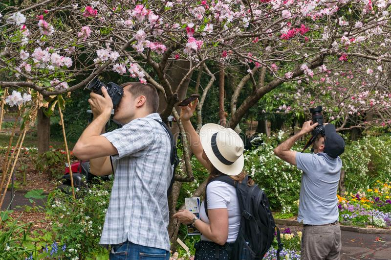 走的人们春天胡同在皇家植物园里在Sydne 库存照片