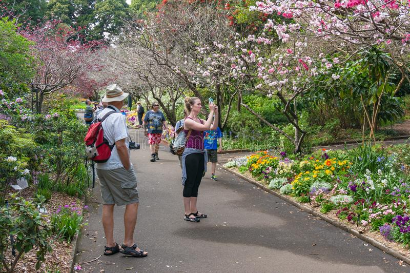 走的人们春天胡同在皇家植物园里在Sydne 免版税库存照片