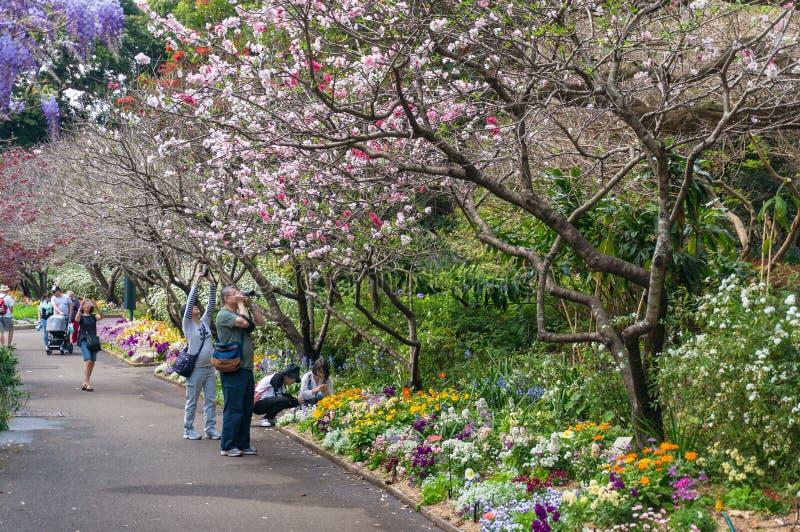 走的人们春天胡同在皇家植物园里在Sydne 免版税图库摄影