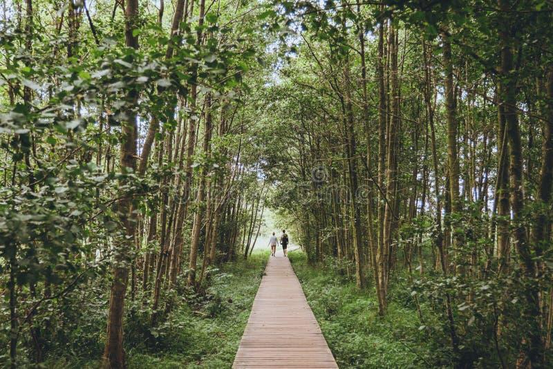走的夫妇一条木道路在森林里 免版税库存图片