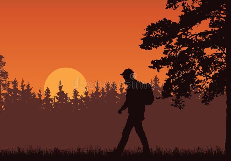 走的游人的现实例证有背包、草和高树的 森林在与朝阳的橙色天空下 ?? 向量例证