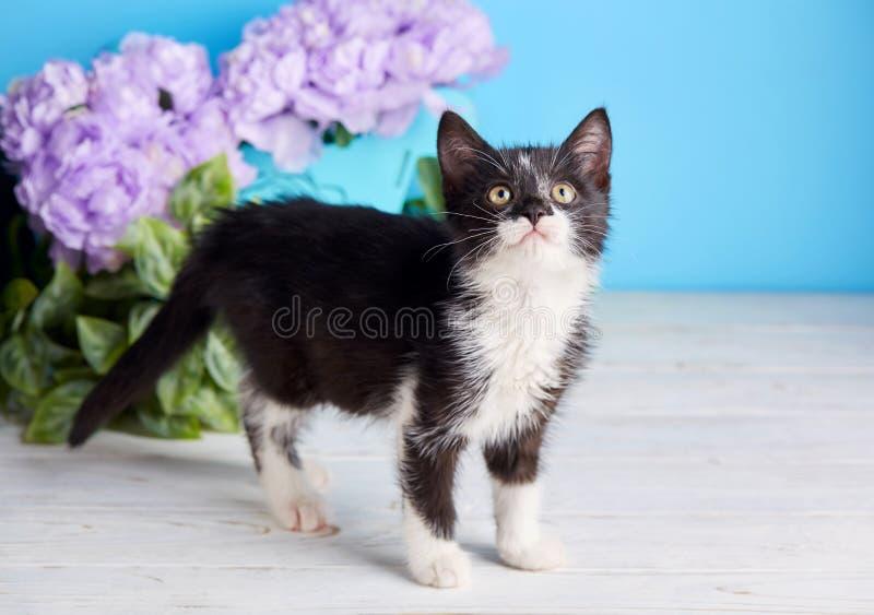 走的蓬松小猫在桌附近 免版税库存图片