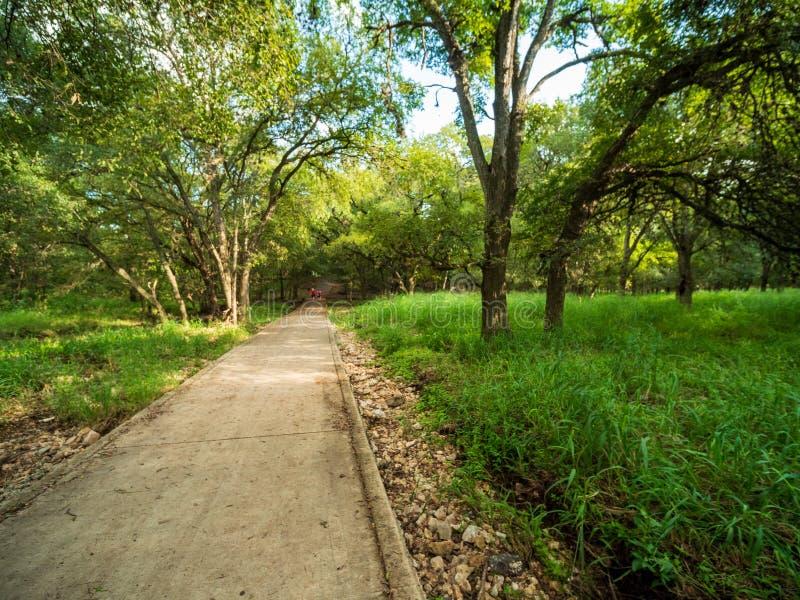 走的足迹在有充满活力的绿色树和植被的安静,平静,平安的森林公园 图库摄影