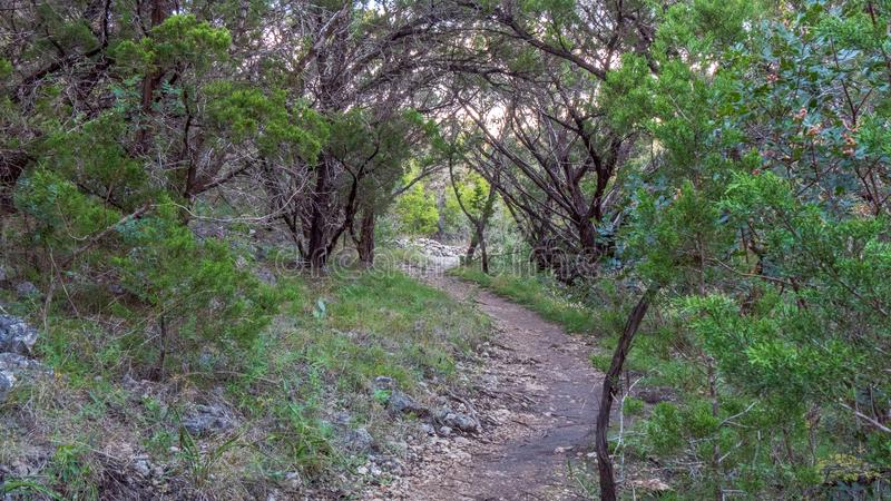 走的足迹在有充满活力的绿色树和植被的安静,平静,平安的森林公园 库存照片
