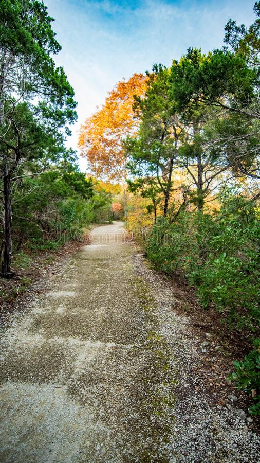 走的足迹在有充满活力的绿色树和植被的安静,平静,平安的森林公园 免版税库存照片