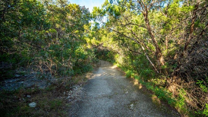 走的足迹在有充满活力的绿色树和植被的安静,平静,平安的森林公园 库存图片