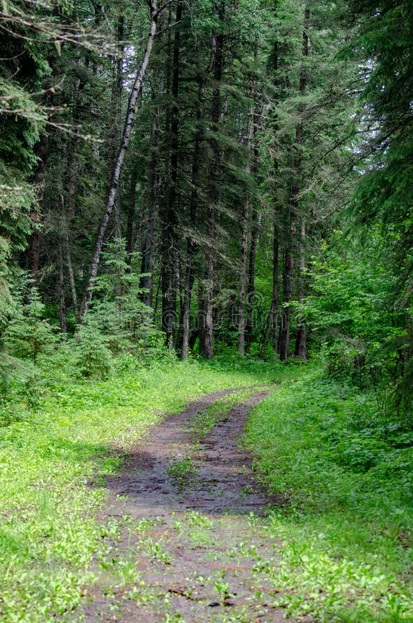 走的足迹在森林里在鸭子山省公园马尼托巴 库存图片