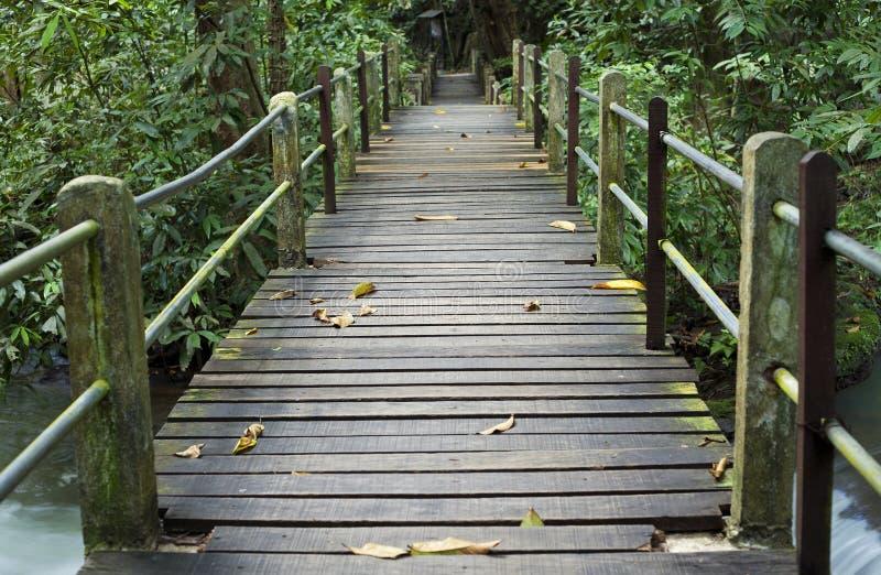 Download 走的足迹能学会自然 库存照片. 图片 包括有 行程, 歇息, 野生性, 浏览, 跟踪, 潮湿, 其它, 通途 - 30330996