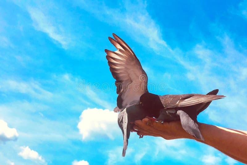 走的鸽子和的鸠在街道上户外 库存照片