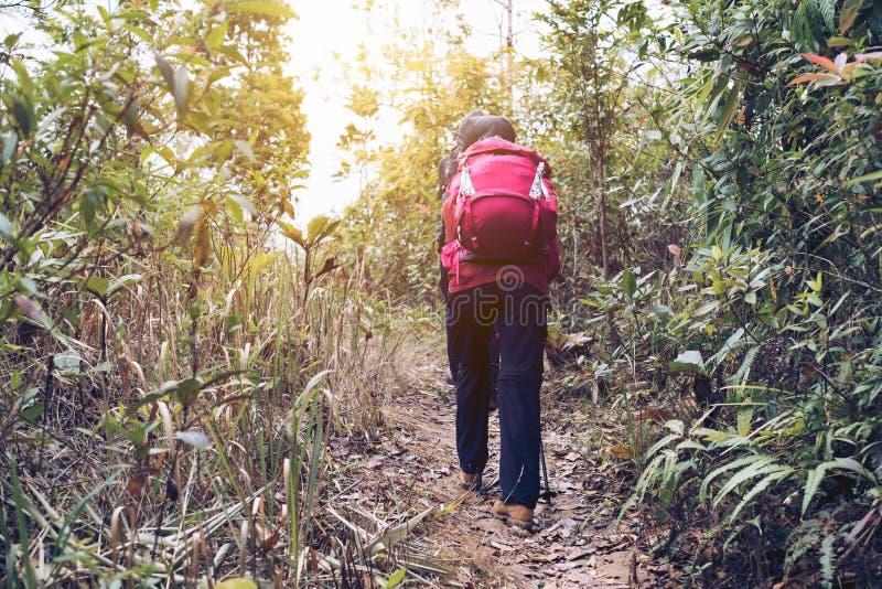 走远足者的少妇锐化在雨林的山 图库摄影