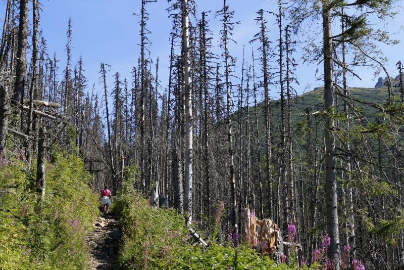 走通过干森林 免版税库存图片