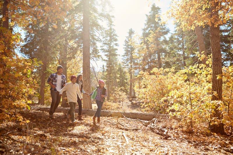 走通过秋天森林地的非裔美国人的家庭 免版税库存图片