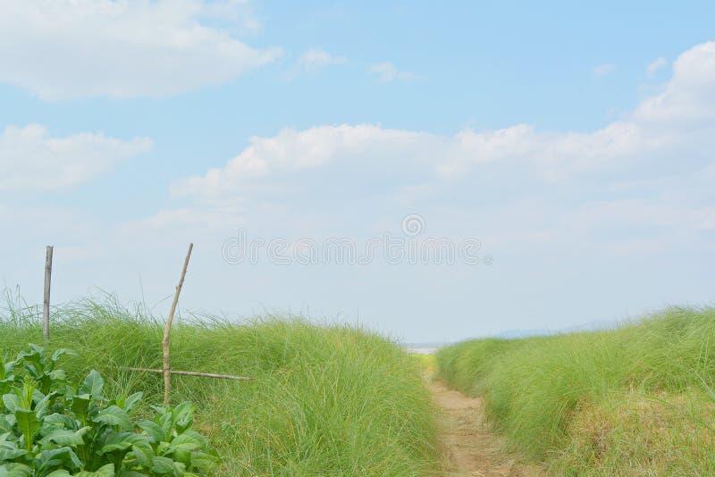 走通过草 库存图片