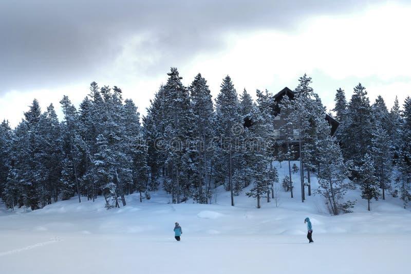 走通过雪的人们在山野荒地杉木森林里 免版税库存照片