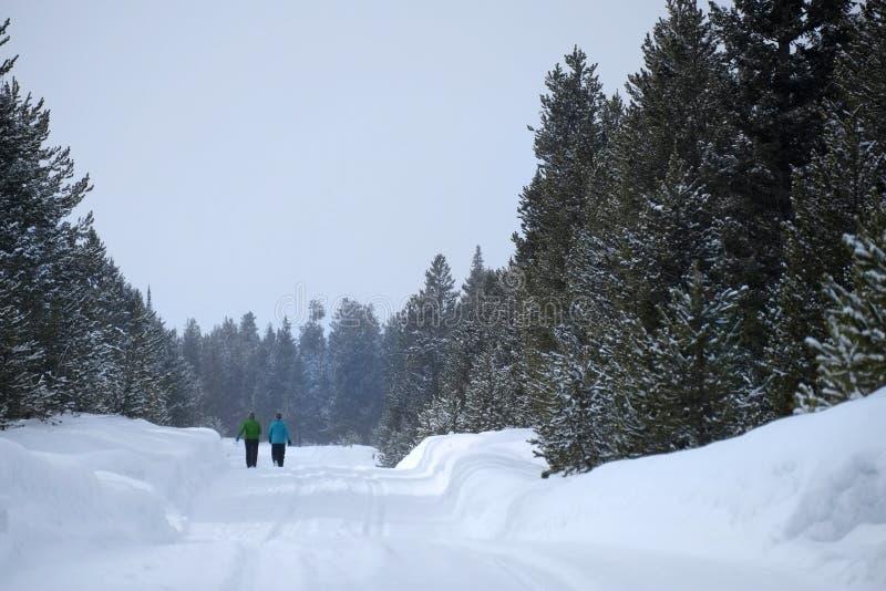 走通过雪的人们在山野荒地杉木森林里 库存照片