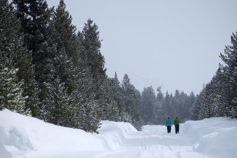 走通过雪的人们在山野荒地杉木森林里 图库摄影