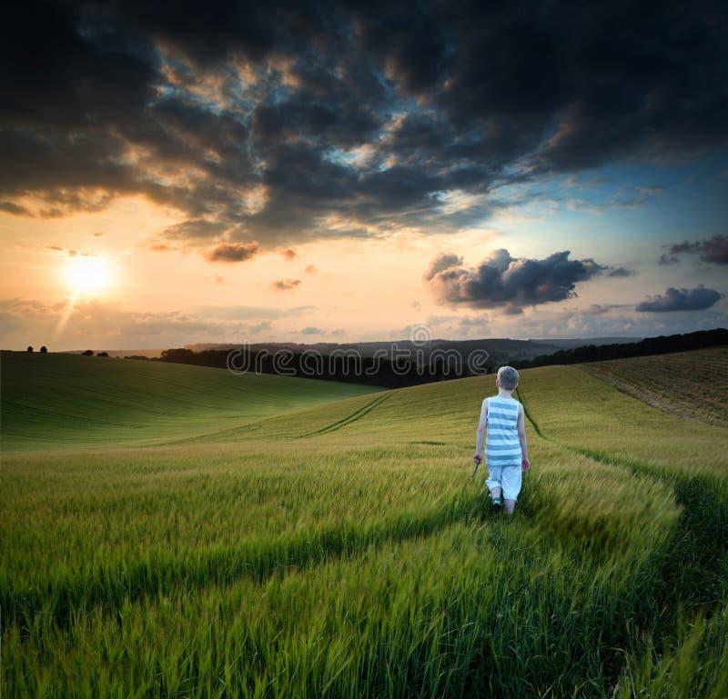 走通过领域的概念风景年轻男孩在S的日落 库存图片