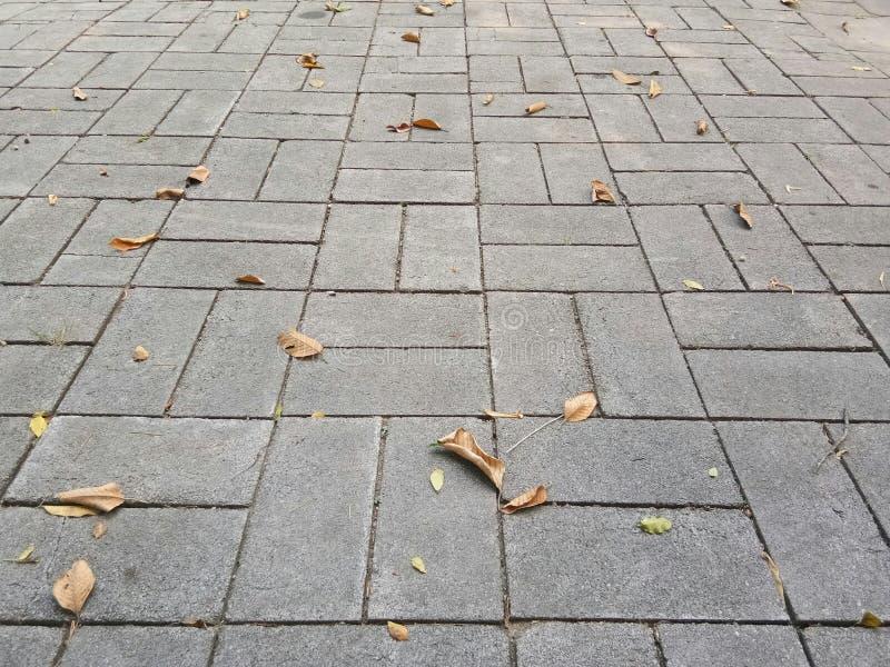 走道和下落的干燥叶子 库存图片