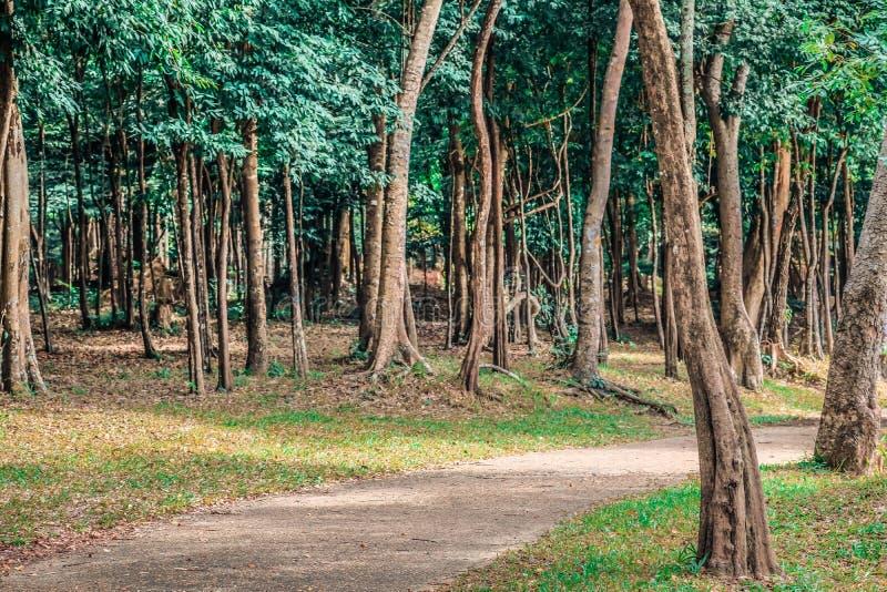 走道在公园,在城市附近 美丽的绿色森林 库存照片