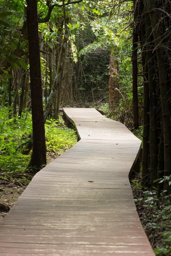 Download 走道在森林里 库存照片. 图片 包括有 木头, 横向, 人行桥, 公园, 旅行, 走道, 本质, 贿赂, 森林 - 59105726