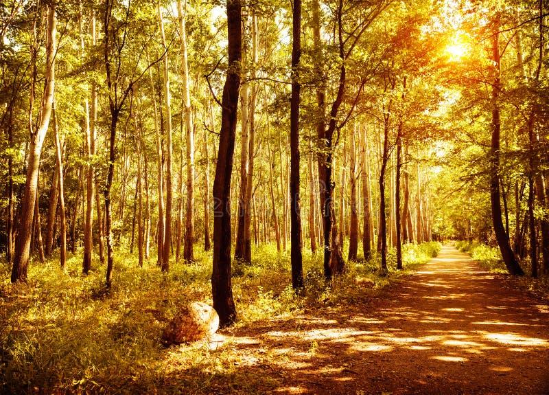 走道在秋天公园 库存图片