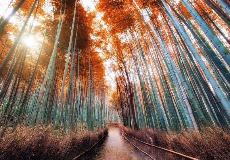走道在秋天竹森林里遮荫与阳光在Arashiyam 库存图片