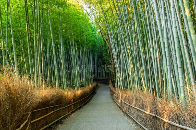 走道在绿色竹森林,旅游著名地方里在日本,京都,Arashiyama 库存照片
