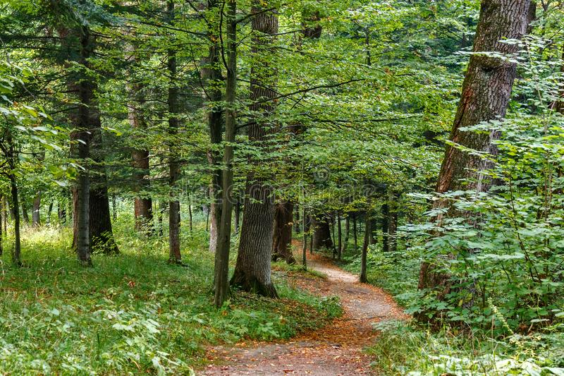 走道有绿色树的车道道路在森林美丽的胡同在公园 路方式通过黑暗的森林 图库摄影