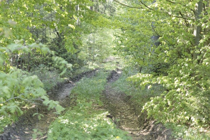 走道有绿色树的车道道路在森林美丽的胡同, r 免版税图库摄影