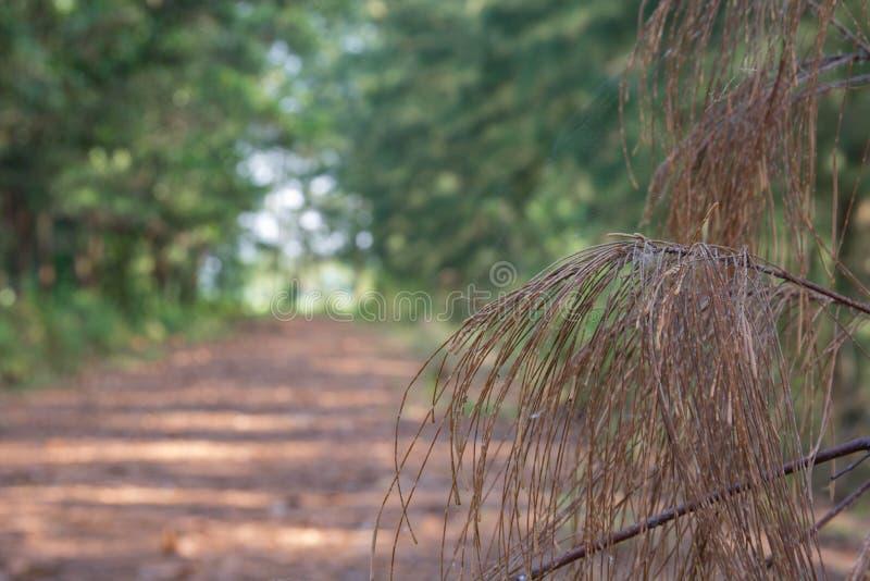 走道有绿色树的车道道路在森林美丽的胡同 库存照片