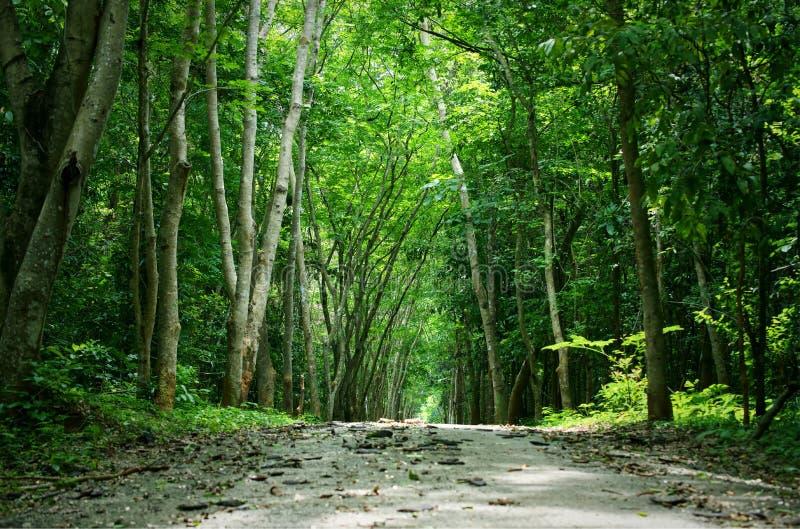 走道有绿色树的车道道路在森林里 免版税库存照片