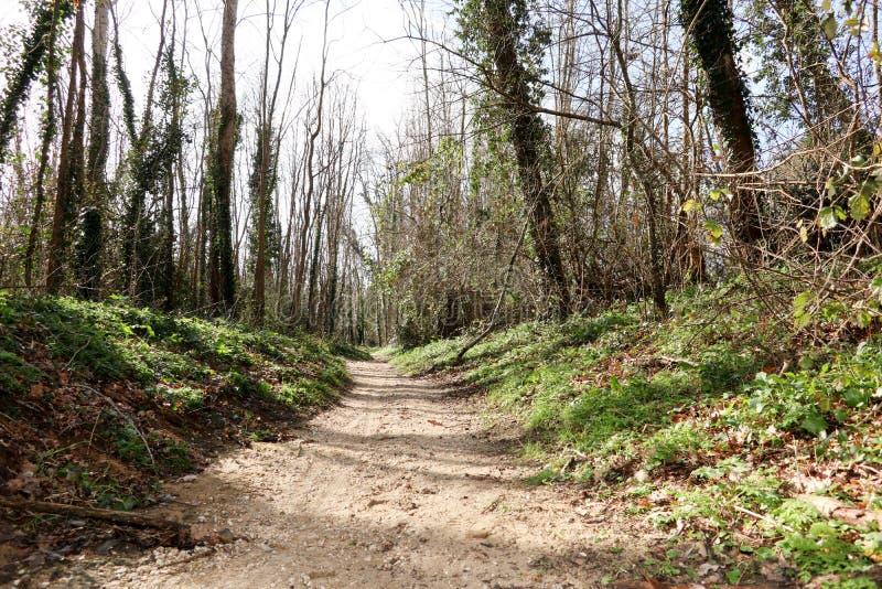 走道有绿色树的车道道路用森林美好的胡同方式 库存图片