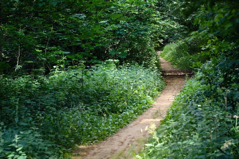 走道有绿色落叶树的车道道路在森林Beautifu里 免版税库存照片