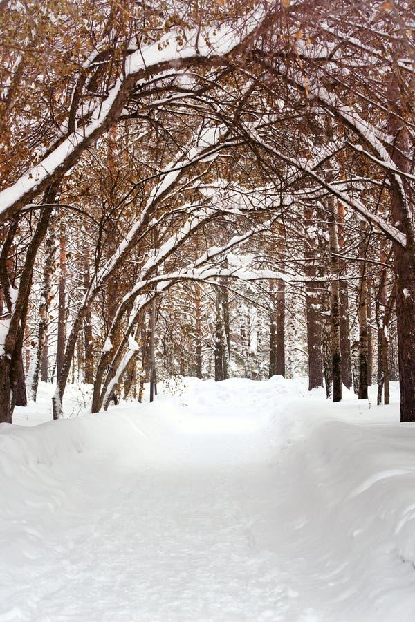 走道车道通过美丽的冬天森林在公园 免版税库存照片