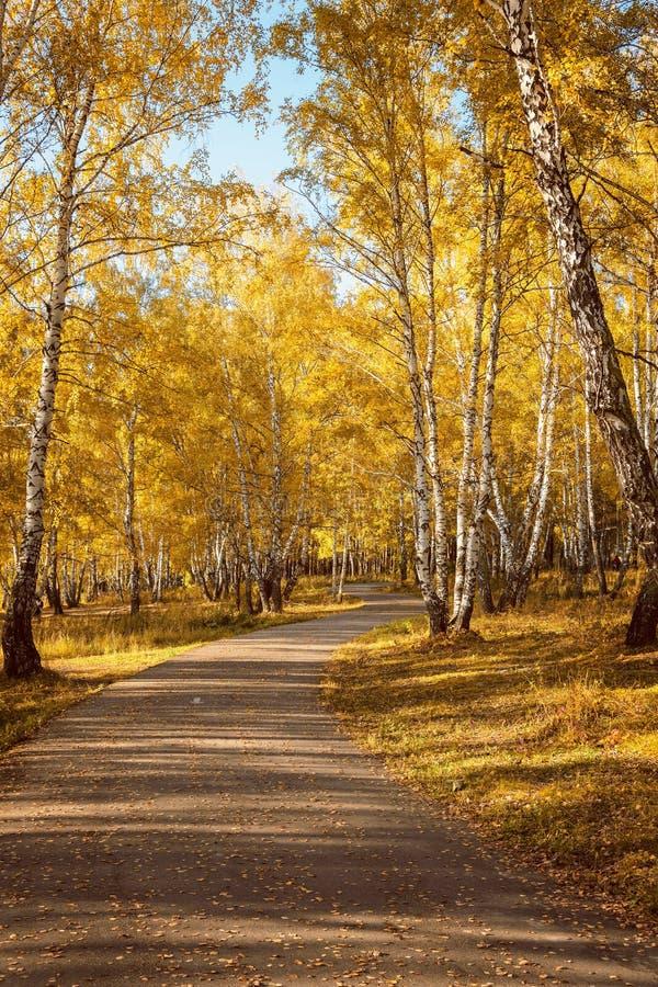 走道车道通过美丽的秋天森林在城市公园 库存照片