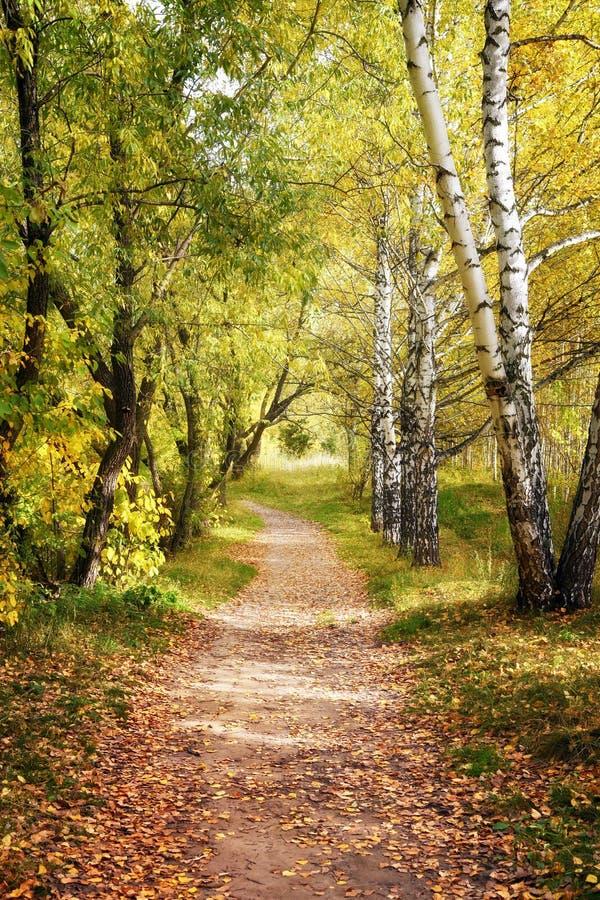 走道车道道路穿过美好的秋天森林秋天风景 库存照片