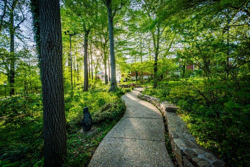 走道通过约翰霍普金斯大学的一个小森林, B的 免版税库存图片