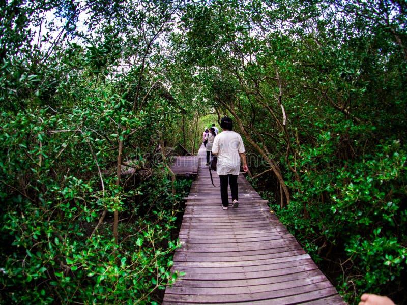走道:木桥在Laem的Phak Bia,Phetchaburi泰国美洲红树森林里 免版税库存照片