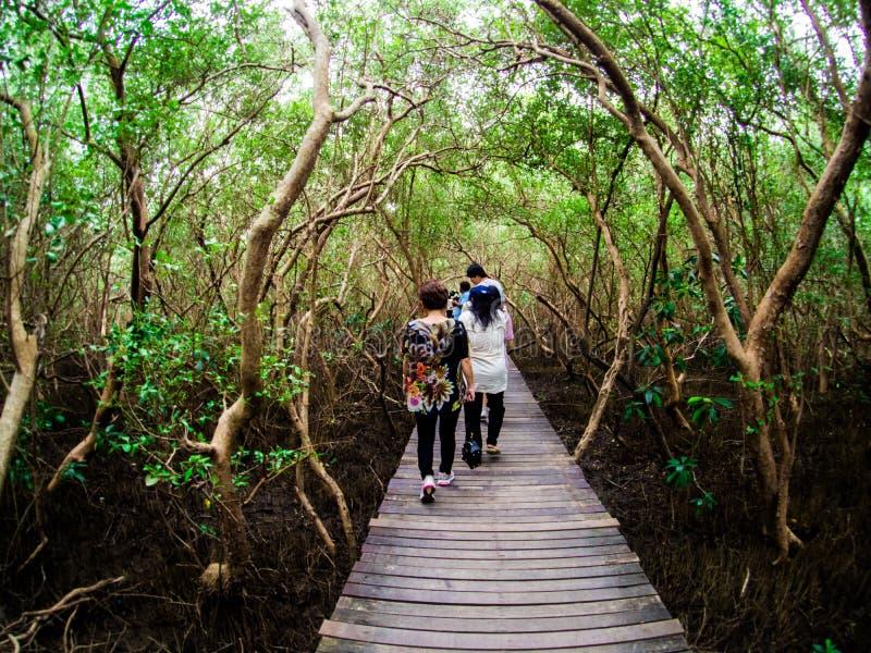 走道:木桥在Laem的Phak Bia,Phetchaburi泰国美洲红树森林里 库存照片