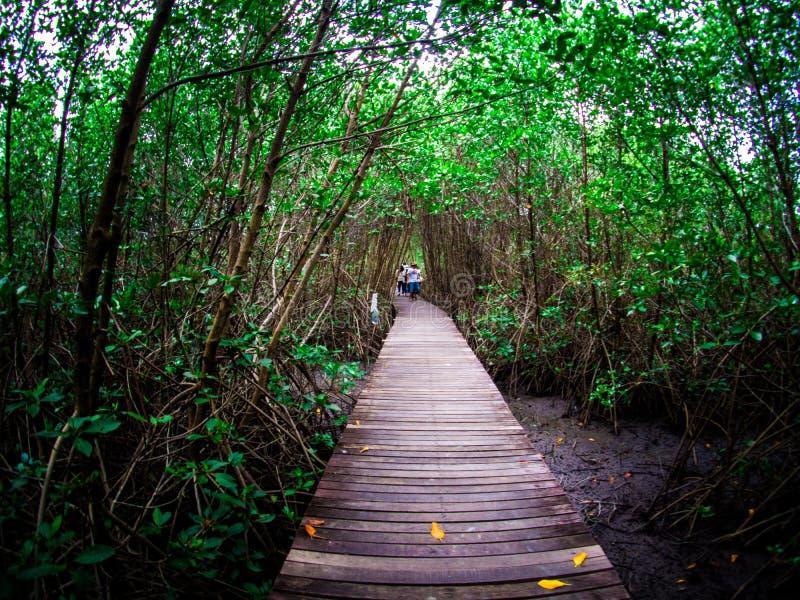 走道:木桥在Laem的Phak Bia,Phetchaburi泰国美洲红树森林里 免版税库存图片