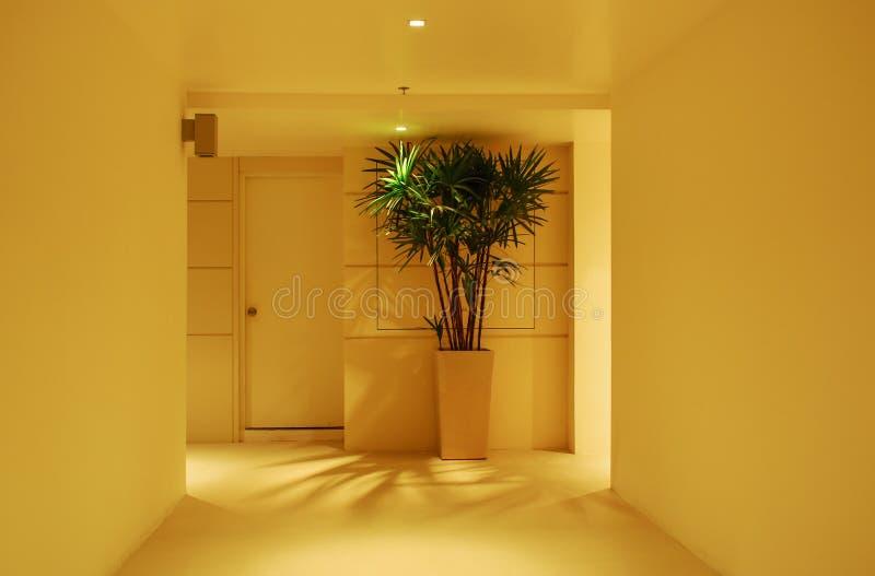 走廊、室内植物和门 免版税图库摄影