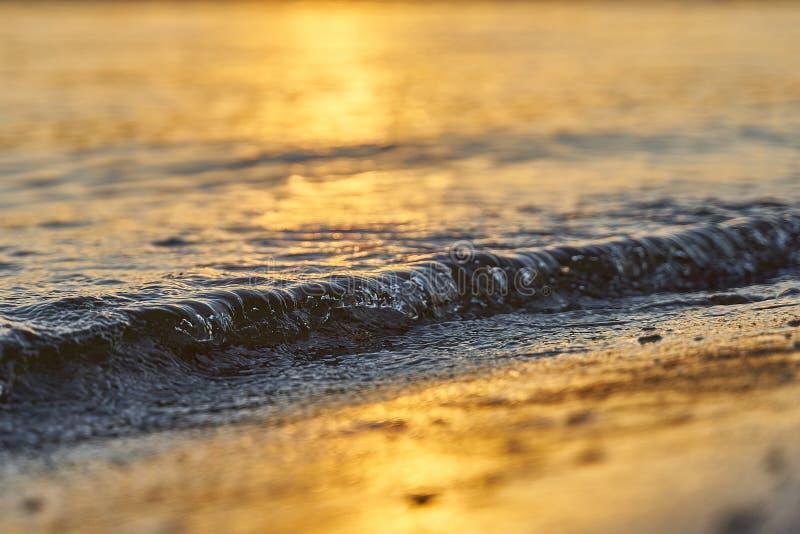 起伏式波特写镜头在一个沙滩的在日落 金黄小时背景 免版税库存图片
